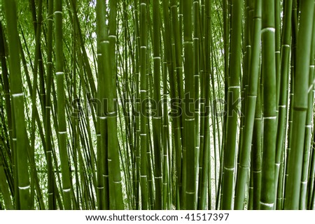 Green bamboo wood