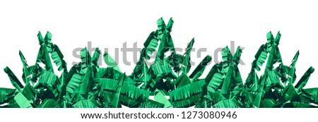 Green banana tree white background with clipping path