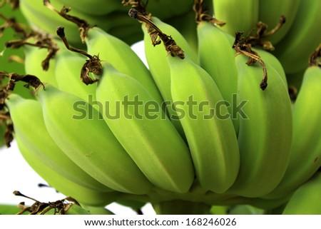 Green Banana Young green banana on tree