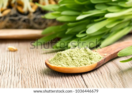 Green barley grass powder on a spoon, with fresh barley grass in the background #1036446679