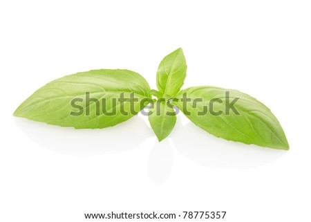 Green basil isolated on white background, clipping path included
