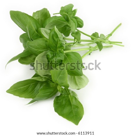 green basil leaves on white background, minimal shadow underneath