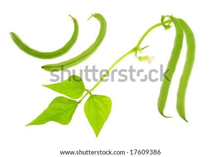 Green coffee cagayan de oro