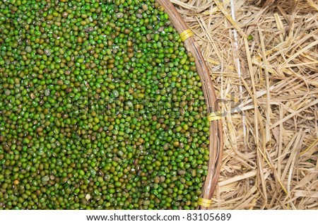 Green beans. closeup Useful as background for design-works.
