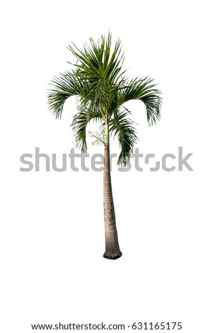 Green beautiful palm tree isolated on white background - Shutterstock ID 631165175