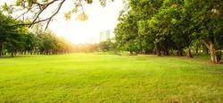 Green beautiful park in morning