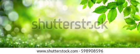 Green beech leaves on natural panoramic nature background with bokeh highlights #598908596