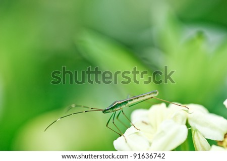 Green Beetle in the jungle