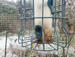 Green bird feeder hanging in a garden in winter with frost. Snow on ground. Seeds and nuts.