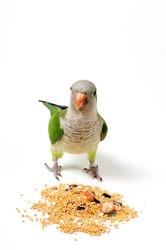 Green Bird  Parakeet Eating Seeds