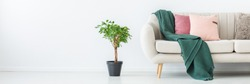 Green blanket and pink pillows on sofa in living room with plant against white wall with copy space