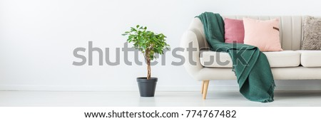 Green blanket and pink pillows on sofa in living room with plant against white wall with copy space #774767482