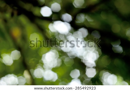 Green bokeh abstract light background, Natural green blurred background, Defocused green abstract background.