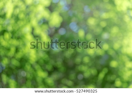 green bokeh background with circles. Summer abstract theme. #527490325