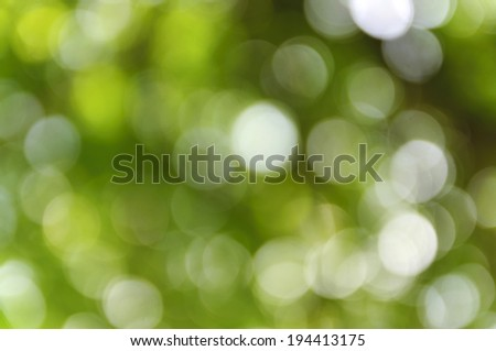 Green bokeh from tree, Natural green blurred background, Defocused green abstract background.