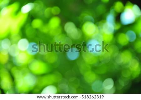 Green bokeh of the tree. #518262319