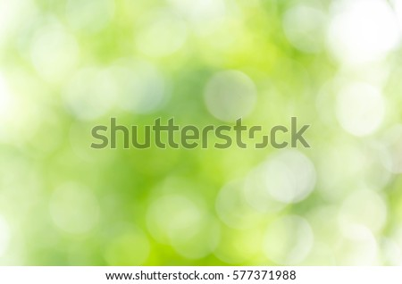 Green bokeh out of focus background from nature forest #577371988