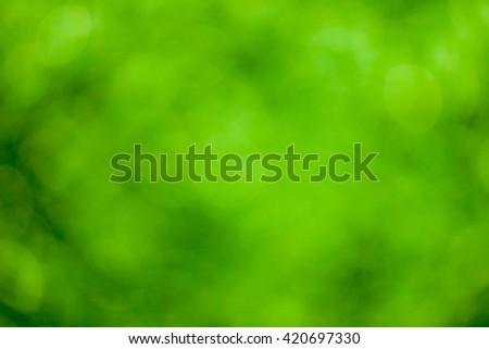 Green bokeh soft background #420697330