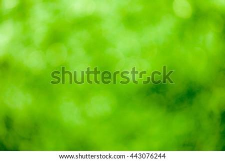 Green bokeh soft background #443076244