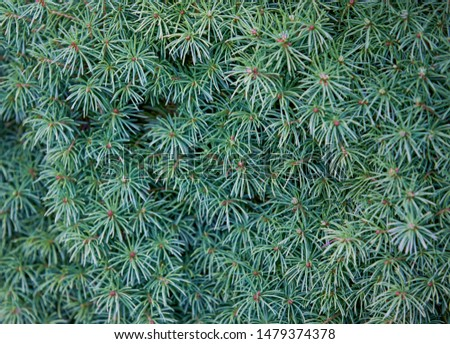 Green botany backdrop, front view on fresh evergreen plant #1479374378