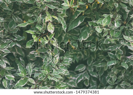 Green botany background, front view on low key fresh foliage #1479374381