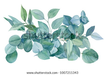 green bouquet, branches and leaves of eucalyptus, watercolor painting, hand drawing,