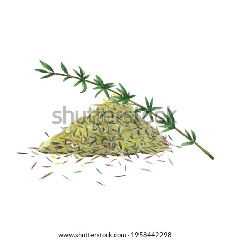 Green branch of thyme and dry spice.  Thyme set  isolated on white background.  Watercolor hand drawn illustration. Zdjęcia stock ©