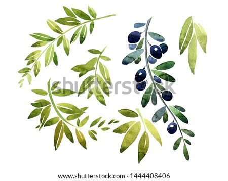 Green branch with foliage. Olive branch, bamboo branch, laurel branch. Design elements for patterns, laurels and compositions for weddings or invitations in floral style. This watercolor.