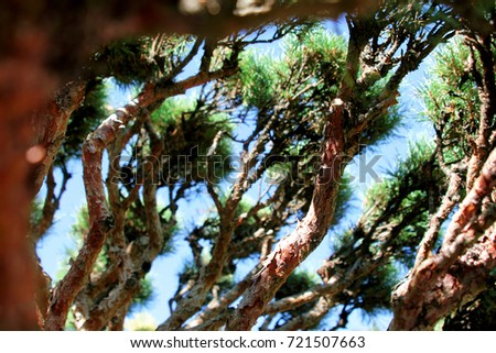 Green branches of a coniferous tree close-up in the daytime. Photo of branches on the background of defocused green coniferous tree #721507663