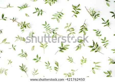 Green branches on white background. Flat lay, top view