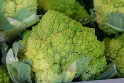 Green Broccoflower vegetable, Brassica oleracea, at a farmers market in Southern California in spring.