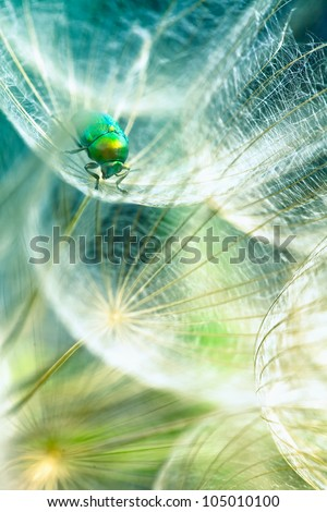 Stock Photo green bug in the dandelion,macro photo from the nature