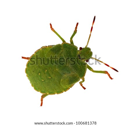 green bug isolated on white background