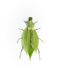 Green bug made from natural materials: different green leaves and wooden thin sticks. Insect isolated on white background. High quality vertical photo