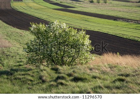 green bush among fields and meadows, spring