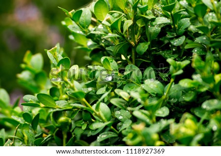 Green bush foliage with deep dark shadows #1118927369