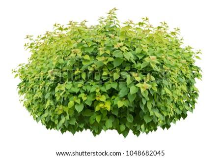 green bush isolated on white background. #1048682045