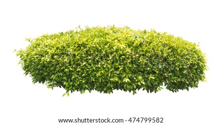 green bush isolated on white background #474799582
