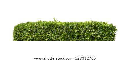 green bush isolated on white background