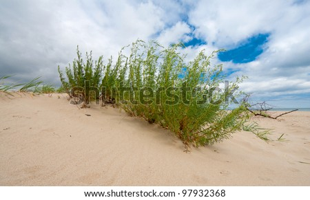 green bush on sands