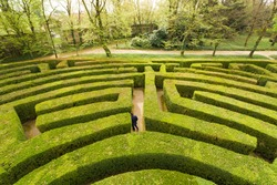 Green bushes labyrinth, hedge maze. A young man with blue jacket searches the exit.