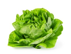 green butter lettuce vegetable or salad isolated on white background