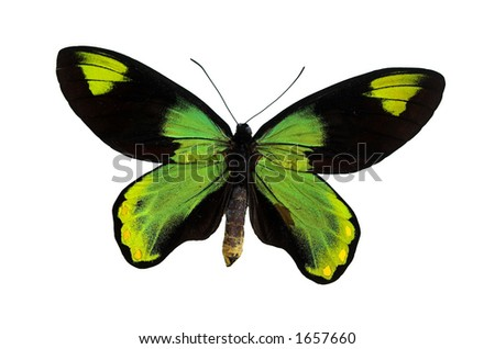 Green butterfly isolated on a white background