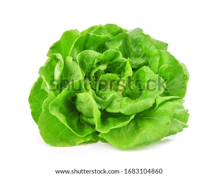 Green butterhead lettuce isolated on white background. Stock photo ©