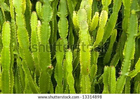green cacti background