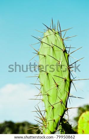 Green Cactus #79950862