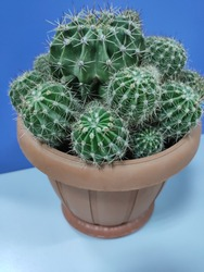 green cactus for home using. green decorative ribcage