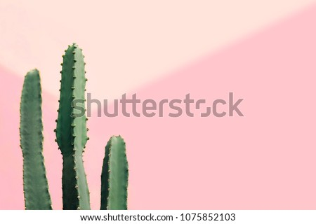 Green cactus on a pastel pink background, copy space