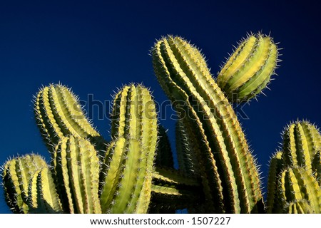 Green Cactus on Blue Sky
