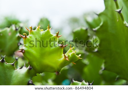 Green cactus on nature background.